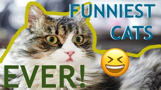 YOU CAN'T HAVE TOO MANY CATS!! | FUNNY CAT COMPILATION