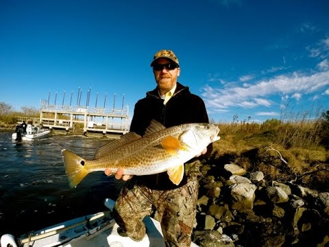 BULL RED FISH - Southwest Louisiana  GOPRO 3+