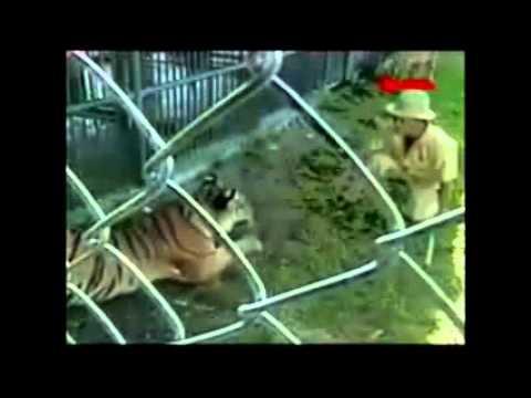 Top 3 los peores ataques de animales a humanos