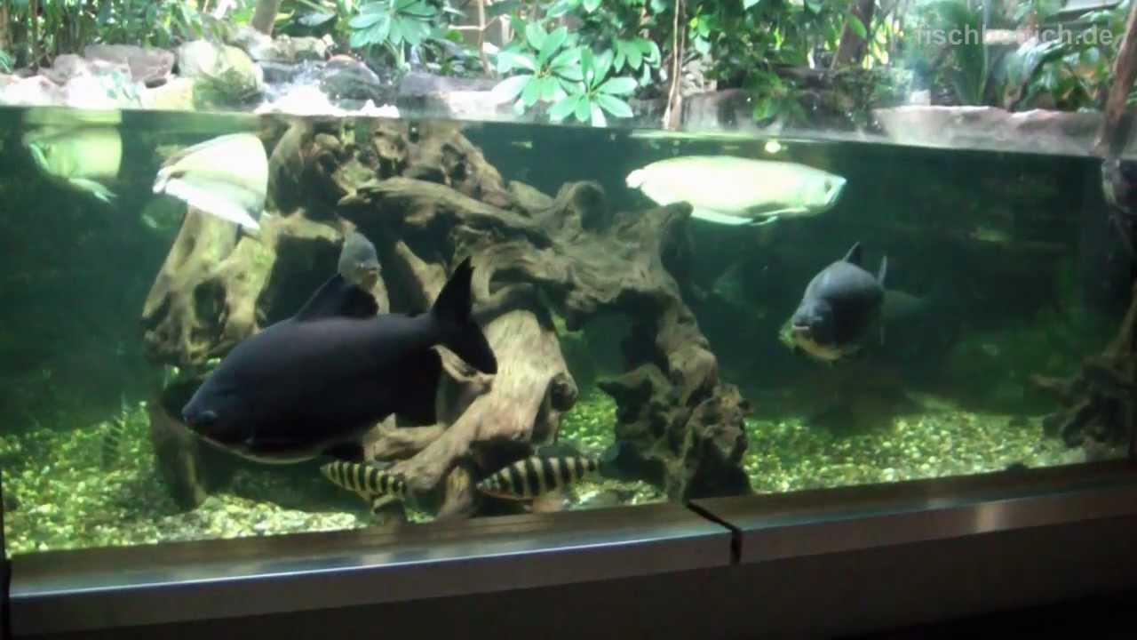hd tank of the giants 13200 us gallon liter landschafts aquarium aquazoo 7 52. Black Bedroom Furniture Sets. Home Design Ideas