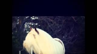 Love this horse xxx