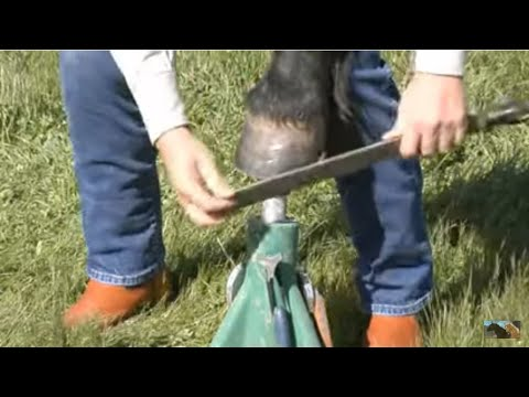 How to trim a bare foot horse - Mustang Hoof Roll - www ...