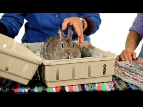 How to Take Your Rabbit on a Car Trip Pet Rabbits