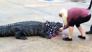 Petite Texas Woman Takes Down 800-Pound Gator
