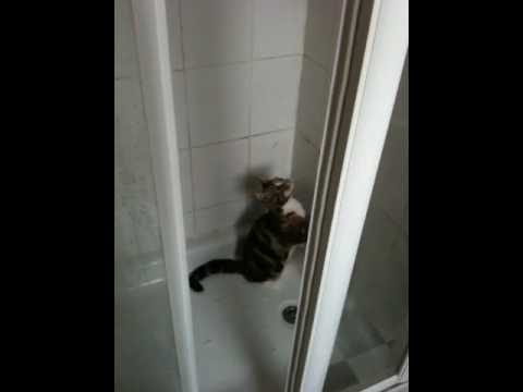 Cute Wet Pussy video