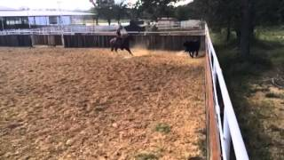 Jag- Jared Lesh cowhorses