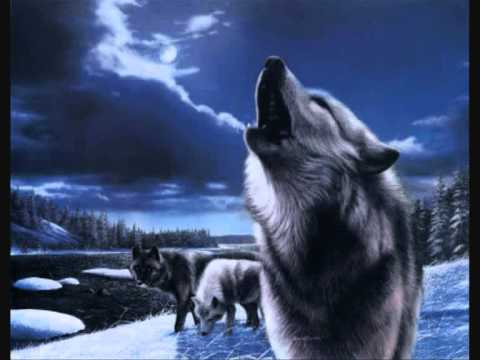 Nightbreed - Pack Of Wolves