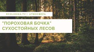 """""""Пороховая бочка"""" сухостойных лесов."""
