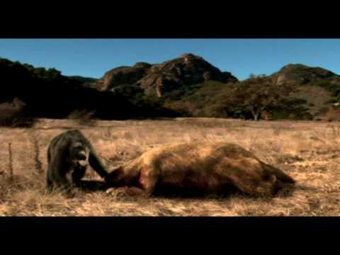 Short faced bear vs Ground sloth Video