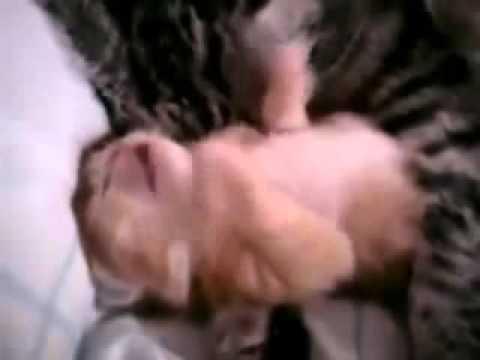 Очень трогательные кошка и котенок