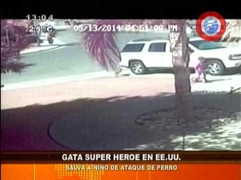 Gata salva a niño de ataque de un perro 14 05 14