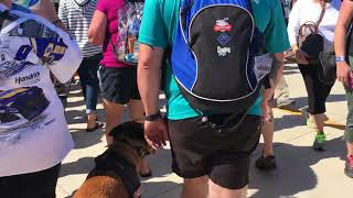 Daytona 500 Off Leash | Off Leash High Level Distraction Dog Training | Off Leash K9