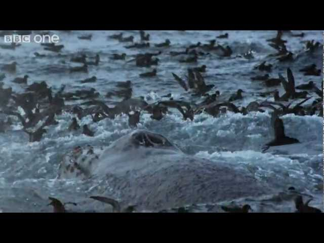 Rich Polar Waters - Frozen Planet - BBC One