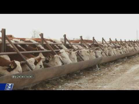 Агросектор. Племенное животноводство в Казахстане