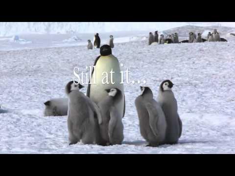 Life in the emperor penguin colony