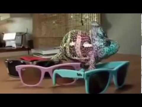 el camaleón que cambia de color [2014]
