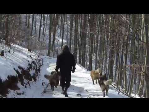 Sarplaninac FCI 4302 - Awesome Dogs