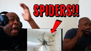 TRY NOT TO LOOK AWAY CHALLENGE (SPIDER EDITION) *99% FAIL* Reaction
