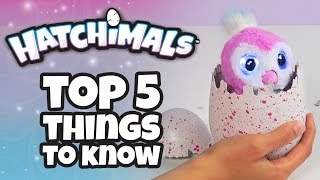 Top 5 Things You Need To Know About Hatchimals