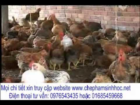 Giúp gà tăng trọng nhanh, xuất chuồng sớm, vịt đẻ nhiều trứng to