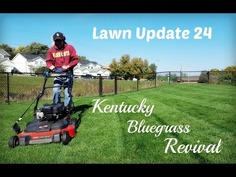 Lawn Update 24 - Kentucky Bluegrass Revival