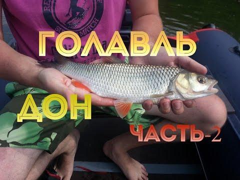 рыбалка на голавля на дону