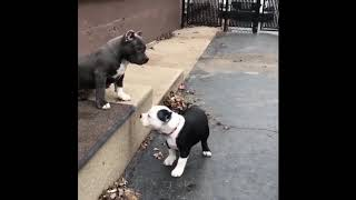 Cute baby animals Videos Compilation cute moment of the animals Cutest Animals