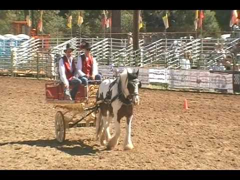 Gypsy Gelding Pierrot At The Draft Horse Classic In Grass Valley, Ca video