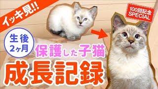 田舎で保護した子猫デュフィが大きくなるまでの成長記録【去勢&体重5倍】