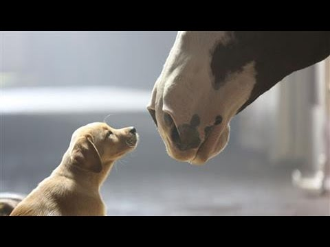 Super Bowl's Top Five Ads With Animals