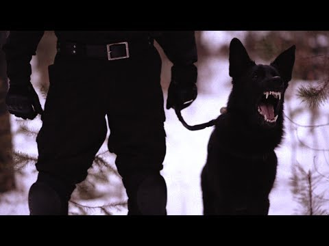 Dog Body Armor Infidel Body Armor Episode 3