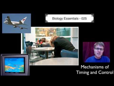 Mechanisms of Timing and Control