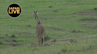 safariLIVE - Sunset Safari - January 15, 2019