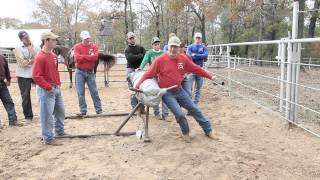 Steer Wrestling 101 Jumping Dummy: Part 1