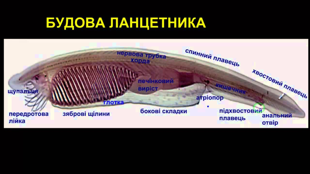 какими травами вывести паразитов из организма человека
