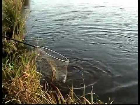 Фидер,карп,платник.Рыбалка в Удмуртии.