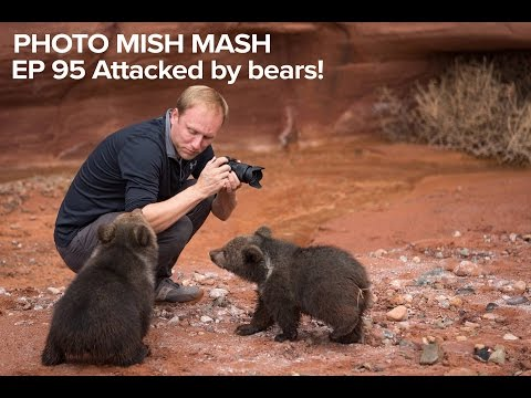 Photo Mish Mash EP 95 - Attacked by Bears