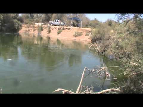 8 25 12 Tilapia Fishing In El Centro Ca