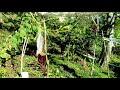 Chayote squash Vine plant production episode 2 organic gardening farm