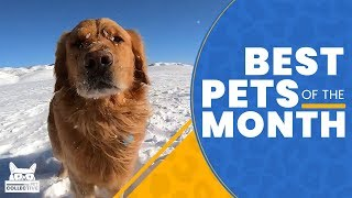 Best Pets of The Month (February 2019) | The Pet Collective