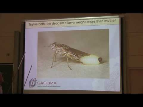 GCI2016: Lecture: The effects of global climate change on Vector-Borne Diseases - John Hargrove
