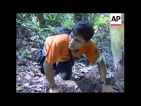 Monitoring endangered tigers in Sumatra