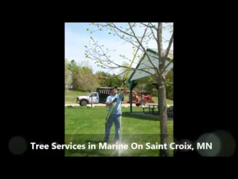 Tree Services Marine On Saint Croix MN, Balsam Tree And Shrub Care Inc