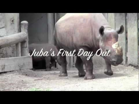 Juba's 1st Day Outside at Cleveland Metroparks Zoo