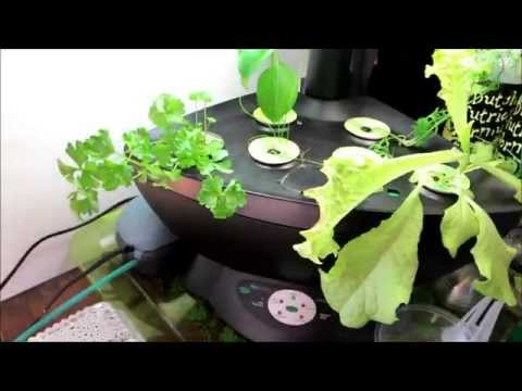 Aerogarden Update 5 How To Save Money And Do It Yourself