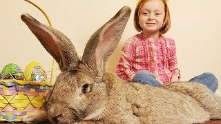 Cute Babies and Rabbits #2 |  Funny Babies and Animals