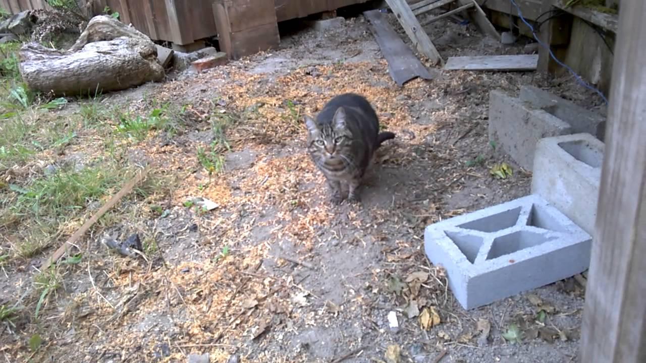 Cat Guard Cat Guarding House...not