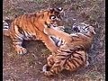 Killers, hunting, killing, mating, eating, teaching young, and the killed (predators and prey)
