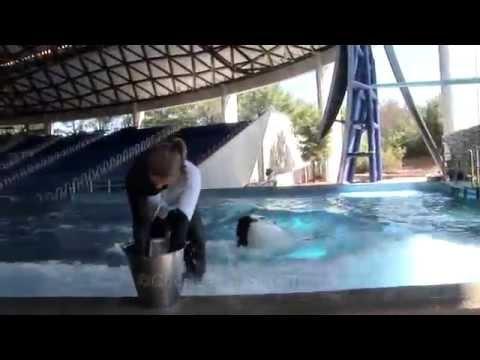 Seaworld park oriando florida   dolphine  san diego zoo panda cam