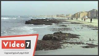 مخلفات البحر والقمامة تغطى شاطئ النخيل بالعجمى